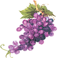 redgrape-flower